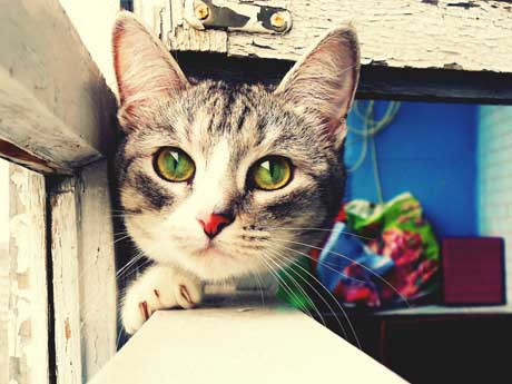 گــربه زیبا