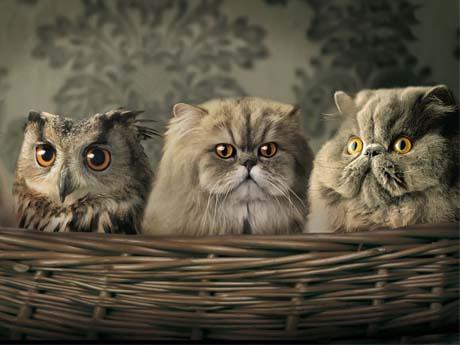 عکس دسته جمعی حیوانات!