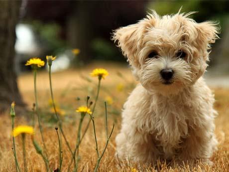 سگ زیبا