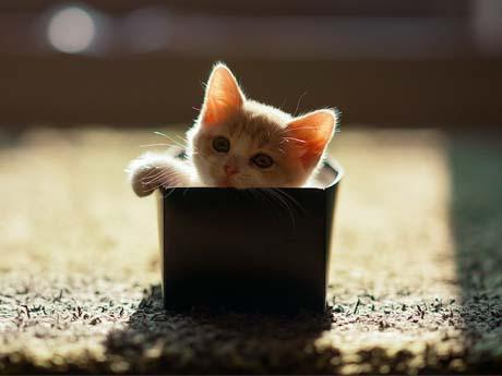 گربه ناز بازی گوش