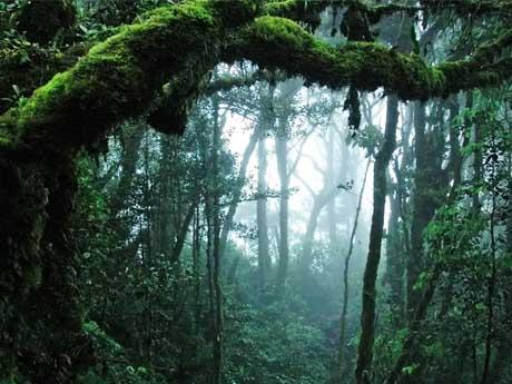 پسزمینه جنگل آمازون