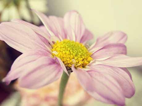والپیپر گل بنفش