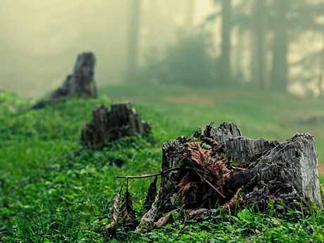 والپیپر جنگل