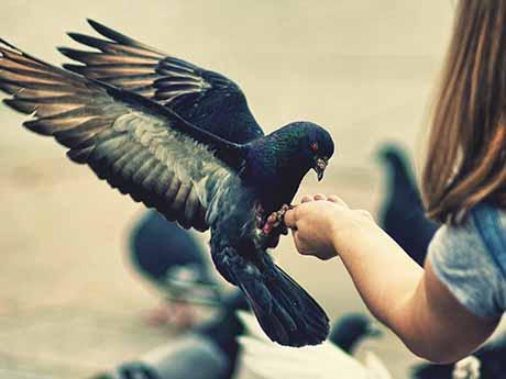 والپیپر دوستی با حیوانات