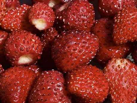 والپیپر توت فرنگی