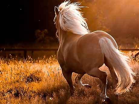 والپیپر اسب