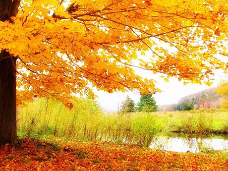 والپیپر پاییز