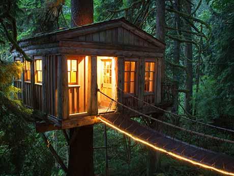 والپیپر خانه جنگلی