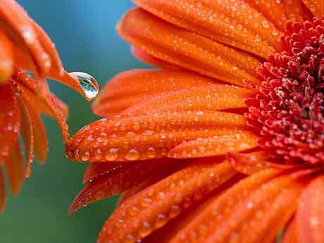 والپیپر گل ژربرا