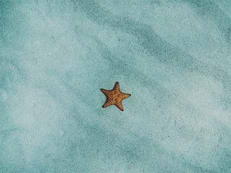والپیپر ستاره دریایی