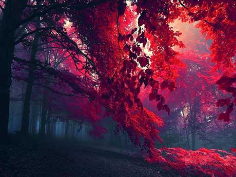 پس زمینه جنگل پاییزی با برگ های قرمز