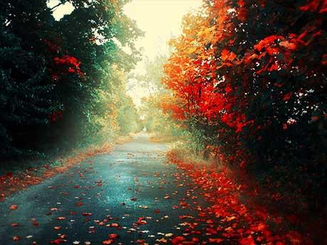 تصویر زیبا از جاده آسفالت در فصل پاییز