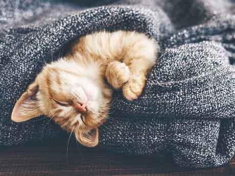 والپیپر بچه گربه ناز خوابیده