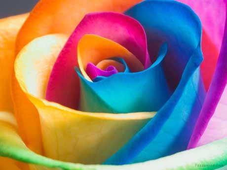 گل رنگی