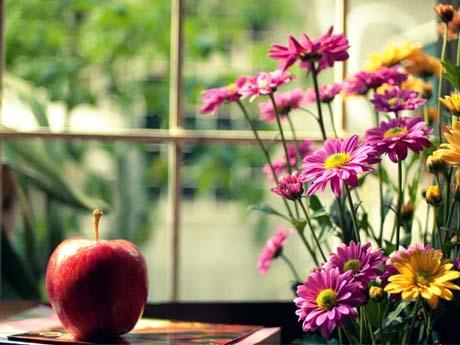 پنجره و گلدان