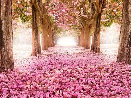 باغ گل رز