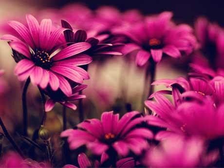 گل های زیبای بنفش