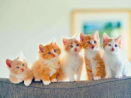 بچه گربه های ناز