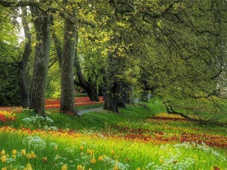 باغ سر سبز و پر گل در فصل بهار