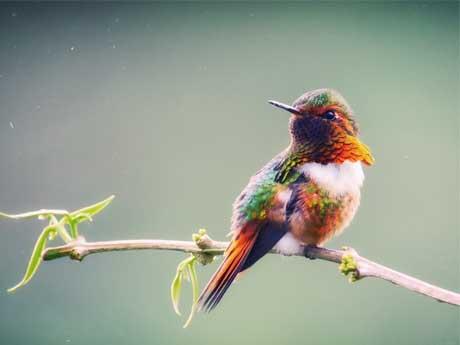 والپیپر پرنده