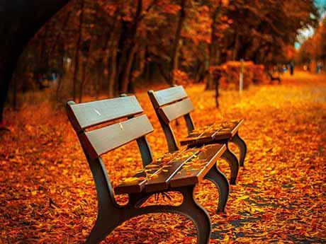 والپیپر منظره پارک در فصل پاییز