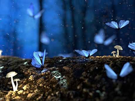 والپیپر پرواز پروانه های آبی در جنگل