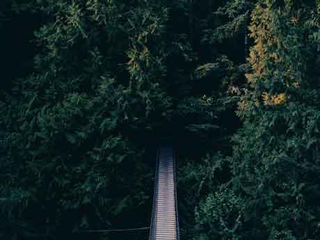 والپیپر پل چوبی در جنگل